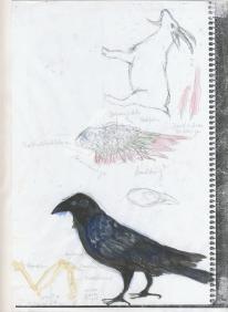 inge-iwa-seipel_zeichnungen_03